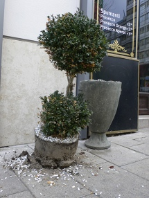 Buchsbäume / Boxtree