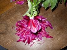 Blüte / Bloom
